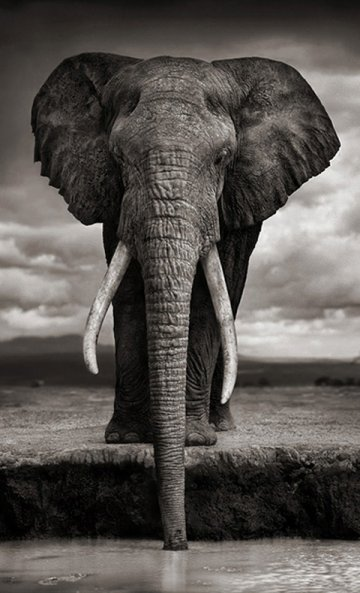 Nick Brandt : Living on Earth...