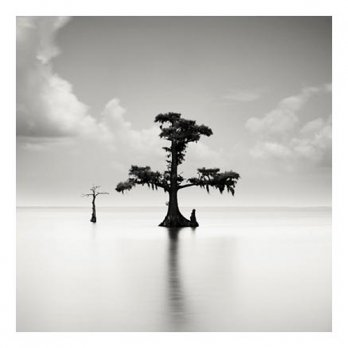 Two Cypresses - Louisiana, USA