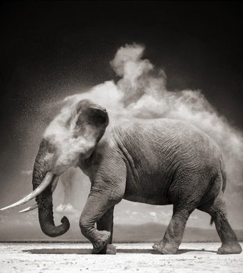 Nick Brandt/Elephant With Exploding Dust