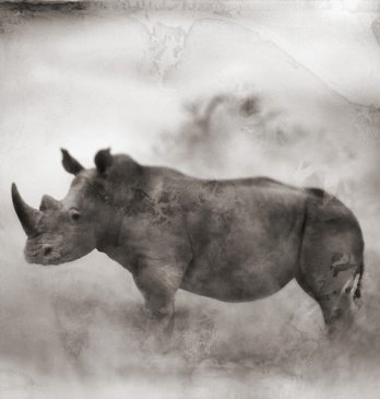 Nick Brandt/Rhino in Dust