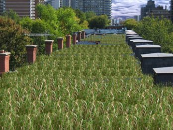 Green Architecture_Green Roofs_North America