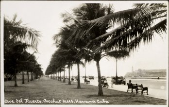 Anonymous, Coconut trees on Avenida Del Puerto, Havana_ND