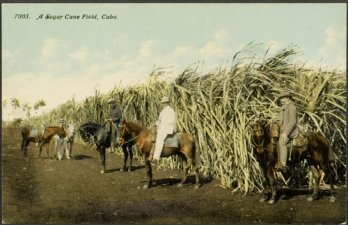 Anonymous, A Sugar cane field, 1914_MBAM, Brian Merret